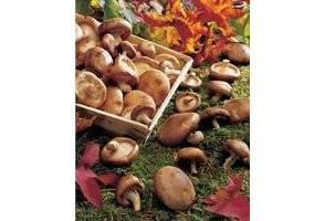 La technique pour congeler les champignons libertalia for Blanchir legumes pour congeler