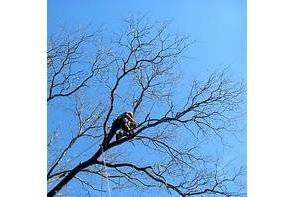 Comment mener bien l lagage et l abattage d un arbre for Prix de l elagage d un arbre