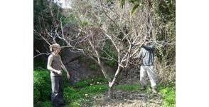Comment tailler les arbres fruitiers pour les rendre fructueux libertalia - Comment tailler les arbres fruitiers ...
