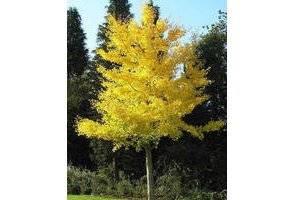 Quel arbre terre argileuse - Quel arbre fruitier planter ...