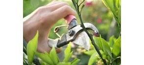 Comment et quand tailler un arbre libertalia - Quand tailler les arbres et arbustes ...